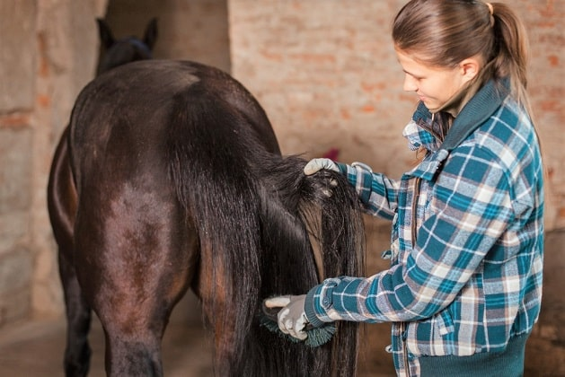 Woman brushing a horses tail