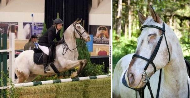 Endo the Blind Appaloosa horse