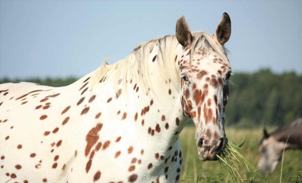 Signs a horse is happy and content. Is my horse happy?
