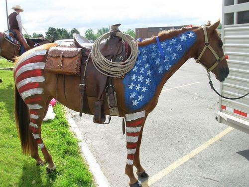 Colorful American flag horse costume DIY how to make one