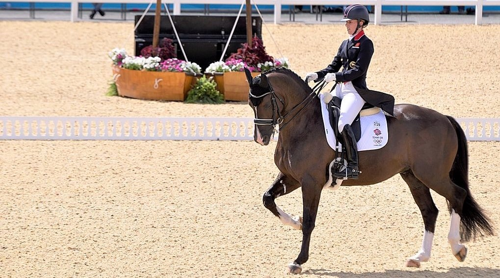 Velegro Olympic dressage horse - Facts you didn't know about Velergo