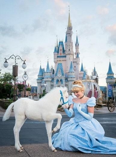 Disney Land new Cinderella horse pony