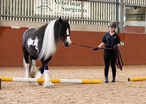 Frodo the rescue horse competing at the Royal Winsor Show