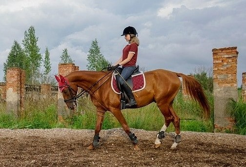 horse riding basics and common mistakes