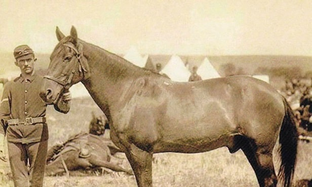 Comanche famous war horse from the United States of America