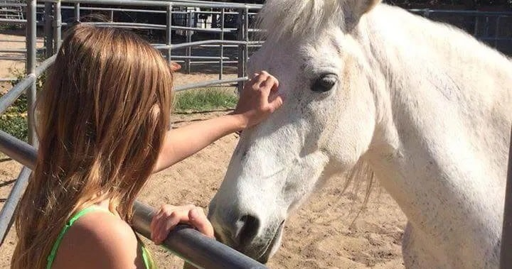Girl saves wild mustang horse from freeway in America