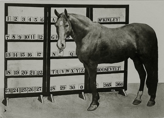 Jim Key, the smartest and most intelligent horse ever