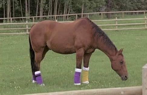 Lightening Dexter horse Heartland TV series