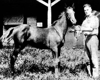 Man o War horse as a foal