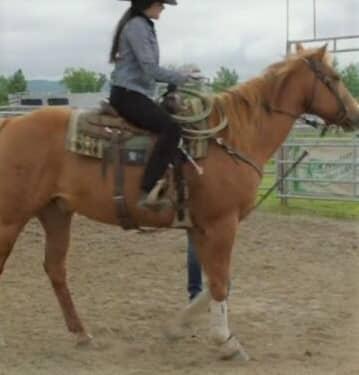 Ringo, horse from Heartland