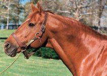8 Interesting Facts About Secretariat (FAQs & History)