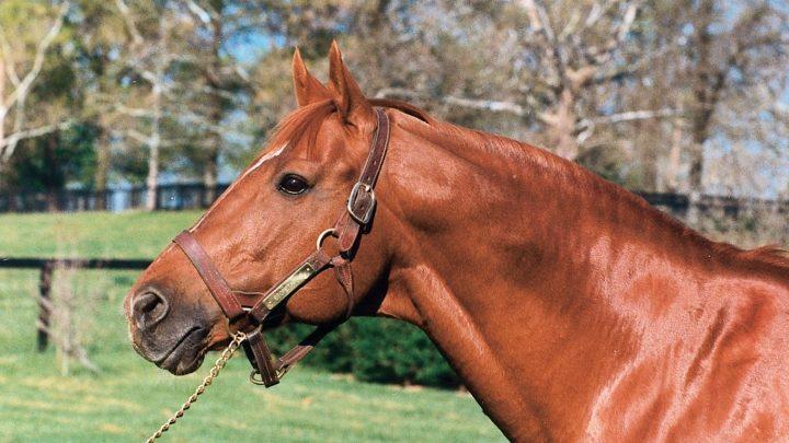 Secretariat famous race horse facts, head shot photo