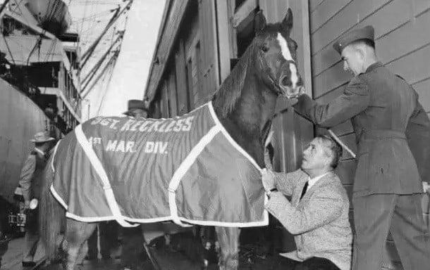 Sergeant Reckless, famous American war horse
