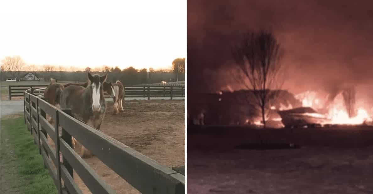 Teen saves Clydesdales from barn fire