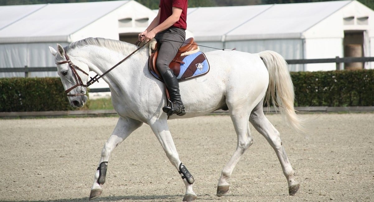 Things horse riders are fed up of hearing