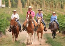 Bed & Breakfast Allows Guests to Ride Horses Rescued From Slaughter