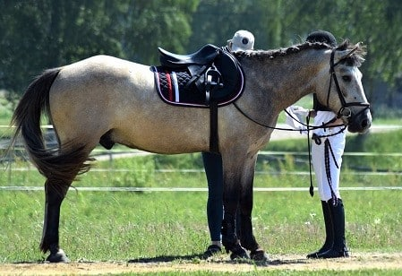 Girl checking the tack on her horse