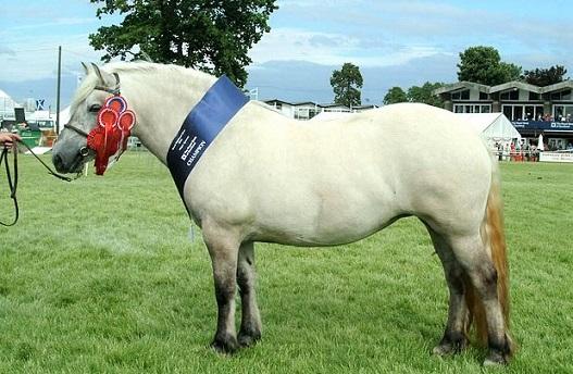 Highland Pony, Native Scottish horse breed