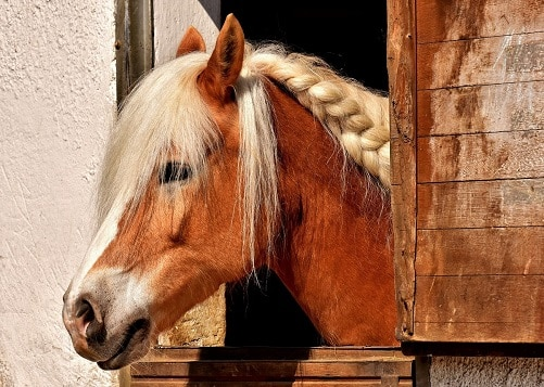 Horse unhappy and bored in it's stable