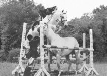 Meet Snowman: $80 Slaughter Horse Turned Show Jumping Champion
