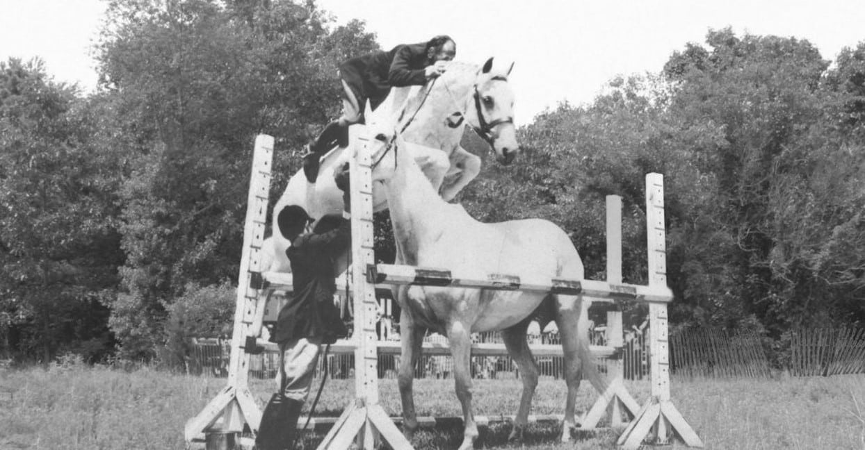 Horse jumping another horse
