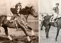 8 Facts You Didn't Know About Seabiscuit