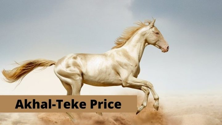 Akhal-Teke Horse Price. How much does an Akhal-Teke horse cost?