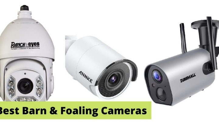 5 best barn, foaling, and calving camera systems (wireless and waterproof)