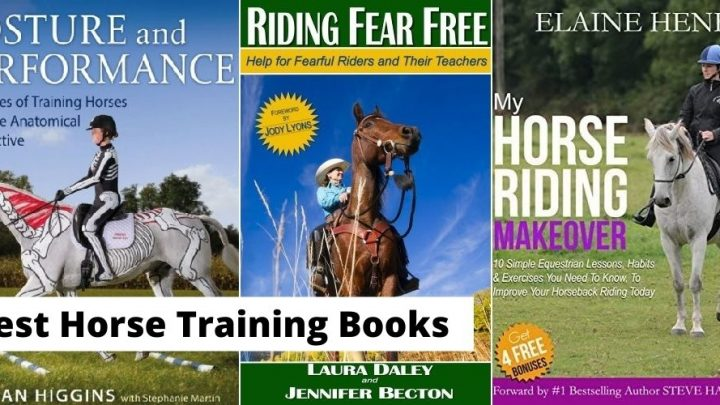 Best horse training and educational books for horse riders and owners