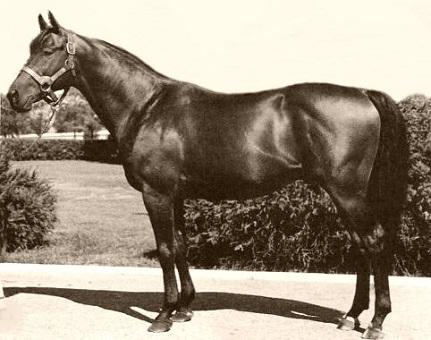 Citation, famous racehorse
