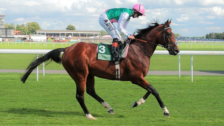 12 most famous racehorses in history. Their records, stats, facts, and overview