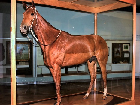 Phar Lap's Taxidermied Remains at the Melbourne Museum