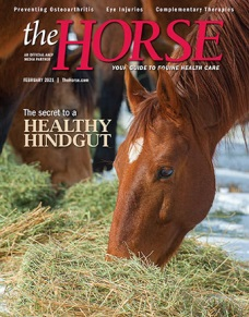 The Horse magazine front cover