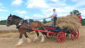Uses for horses by humans throughout history. Shire horse working in a field in the UK