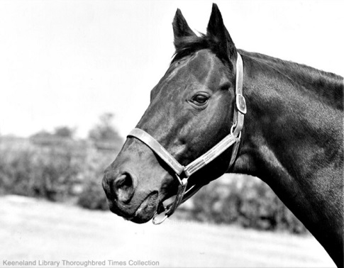 Head and face of the racehorse War Admiral