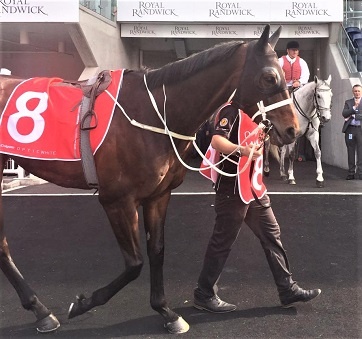 Winx, famous racehorse at the race track