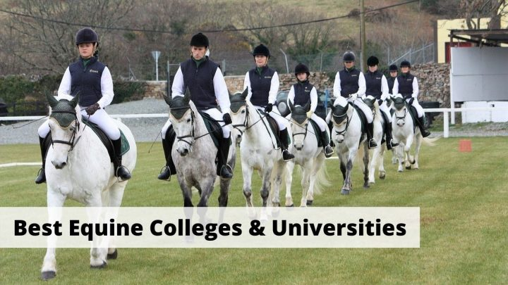 Best Equestrian Colleges & Universities in the USA. Equine and horse care courses and equestrian teams