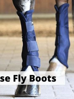 Best fly boots for horses. Horse wearing four new fly boots
