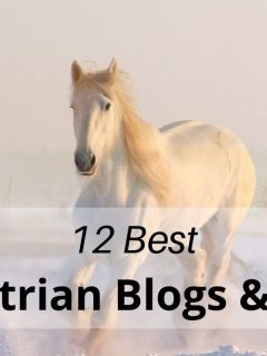 Best horse blogs and vlogs for equestrians