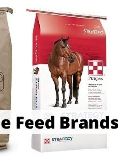 7 Best horse feed brands for horse owners