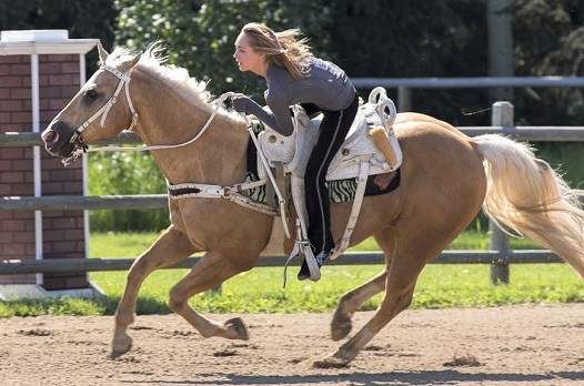 Boots, Palomino trick riding horse on Heartland TV show