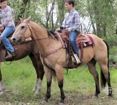 Buddy, Buckskin horse from Heartland