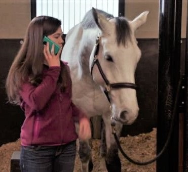Budget Buster, grey horse on Heartland
