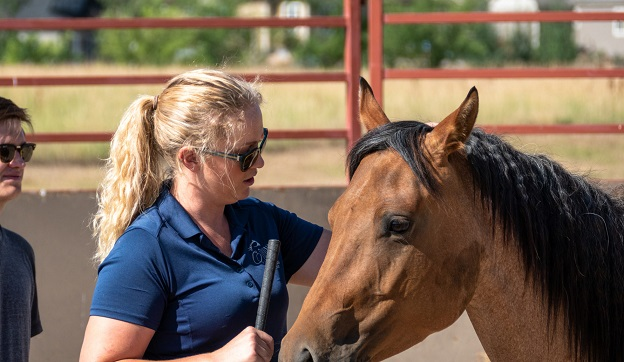 Colorado State University equine science student stroking a horse