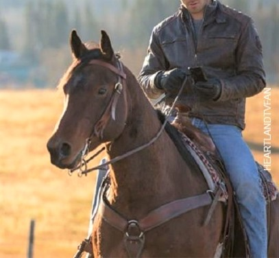 Harley, horse ridden by Ty Borden on Heartland