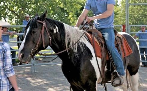 Kramer, brown and white horse on Heartland