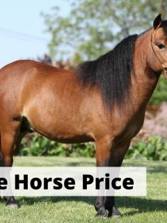 Miniature horse price. How much does a miniature horse cost?