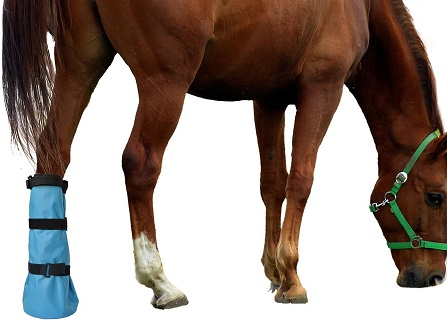 Horse wearing a yeezo Hoof Soaking Boot