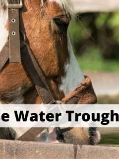 Best water troughs for horses and livestock tanks