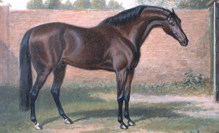 Godolphin Arabian horse